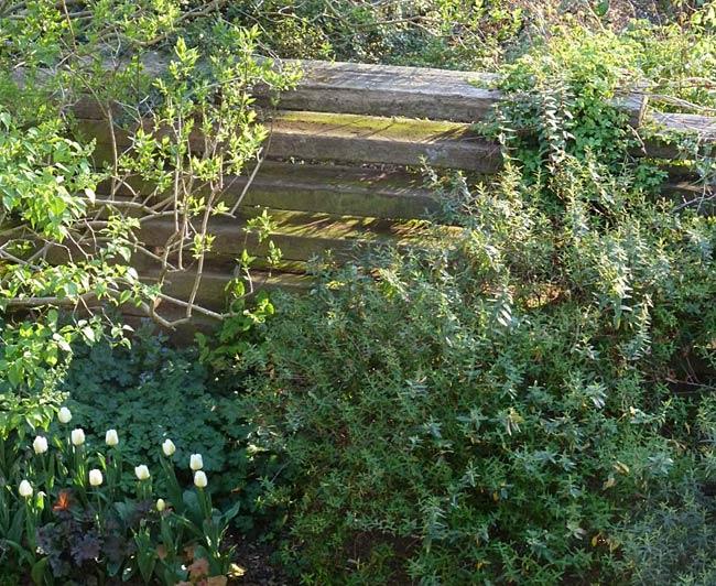 A non designed London designer garden Dilip Lakhani